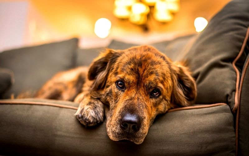 How to Identify and Treat Dog Depression